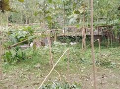 নাগরপুরে অসহায় ফরিদের কাঠবাগানের গাছ কেটেছে দুর্বৃত্তরা