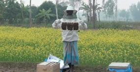 নবাবগঞ্জে সরিষা আবাদের পাশাপাশি কৃষকদের মৌ চাষ