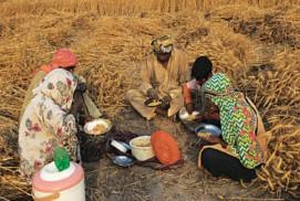 ভারতের গ্রামাঞ্চলে ৭৫% মানুষেরই জোটে না 'পুষ্টিকর খাবার'