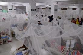 ডেঙ্গু আক্রান্ত হয়ে আরও ২০৪ জন হাসপাতালে