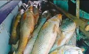 ভারতে ১৫৭টি মাছ বিক্রি হলো দেড় লাখ টাকায়