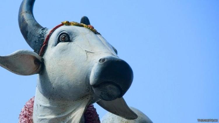 গরুকে জাতীয় পরিচয়পত্র দিতে যাচ্ছে ভারত