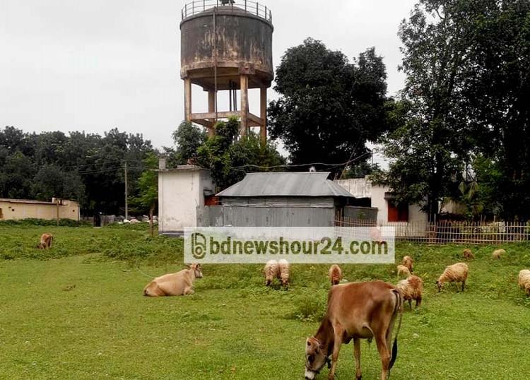 লালমনিরহাট বিসিক শিল্পনগরী জ্বালাতে পারেনি আশার আলো; শিল্পনগরীটি যেন গোচারণভূমি