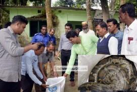 পিরোজপুরের মঠবাড়িয়ায় অজগর সাপ উদ্ধার,বনে অবমুক্ত