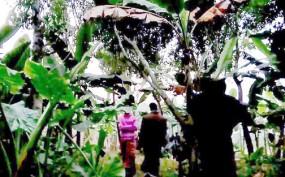 শৈলকুপার কলাবাগানে বসছে রমরমা জুয়ার আসর!