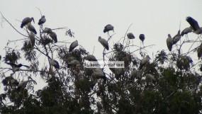 অতিথি পাখিদের অভয়ারণ্য ব্রাহ্মণবাড়িয়ার বিজয়নগর