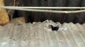 খোকসায় আ. লীগ নেতা মিজানুর রহমান বিটুর চাচার বাড়িতে দুর্বৃত্তদের গুলি