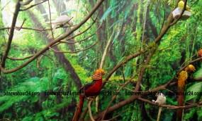 জাতীয় প্রেসক্লাবে বিদেশী পাখিদের ভীড়!
