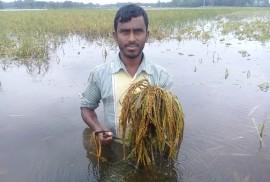 কেন্দুয়ায় বোরো ফসল তলিয়ে গেছে, কৃষি কর্মকর্তার দেখা মেলেনি