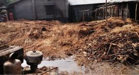 নবাবগঞ্জে মাড়াই মেশিনের আগুনে ভূস্মিভূত ৭ বিঘা জমির ধান