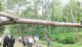 মৌলভীবাজারে কালবৈশাখীতে গাছ উপড়ে ট্রেন চলাচল ব্যহত