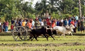 মাগুরায় ঐতিহ্যবাহি গরুর গাড়ি দৌড় প্রতিযোগিতা