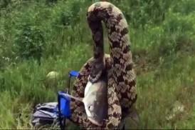 সাপ দিয়ে মাছ শিকার! (ভিডিওসহ)