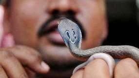 উপজাতিরা তো সাপ খায়, তাহলে কি বাংলাদেশে ছড়াবে করোনাভাইরাস?