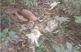 আলমডাঙ্গায় ৪টি নিরীহ কুকুরছানাকে নৃশংসভাবে হত্যা